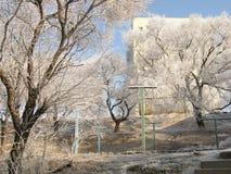Чудеса природы зимы Стоковые Фото