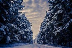 Чудесная дорога зимы и лес Стоковые Фотографии RF