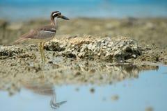 Чудесная птица Стоковое фото RF