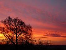 Чудесное красное небо вечера Стоковые Изображения