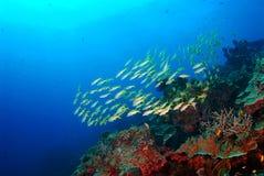 Чудесное подводное Similan, северное море Andaman Таиланд Стоковое фото RF