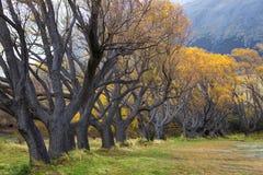 Чудесные желтые цветы осени Стоковое Изображение