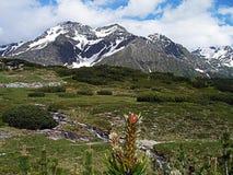 Чудесные снег-покрытые пики швейцарских гор Стоковая Фотография RF