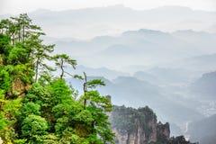 Чудесный взгляд деревьев растя na górze утеса, гор воплощения Стоковые Изображения