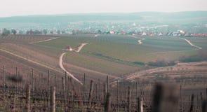 Чудесный виноградник в Баварии стоковые фото
