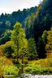 Чудесный лес реки весной Стоковые Изображения RF