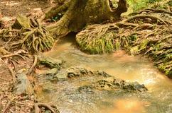 Чудесный корень дерева Стоковая Фотография RF