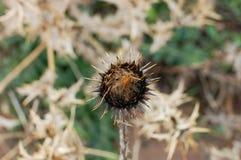 Чудесный цветок в природе Стоковая Фотография RF