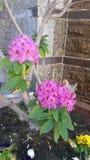 Чудесный цвет Стоковое Фото