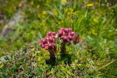 2 чудесных цветка Стоковые Изображения RF