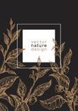 Шаблон вектора ветви чая, лист Стоковые Изображения