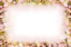 Шаблон рамки предпосылки весны для дизайна Цветя Сакура стоковая фотография