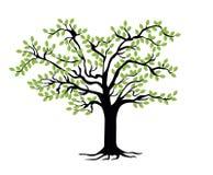 Шаблон фамильного дерев дерева Родословный вал иллюстрация штока