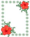 шаблон hibiscus граници флористический Стоковое Изображение