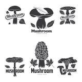 Шаблоны логотипа гриба Стоковые Фото