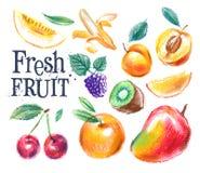 Шаблон дизайна логотипа вектора свежих продуктов Зрелый плодоовощ Стоковое Изображение