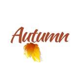Шаблон логотипа осени Стоковое Изображение RF