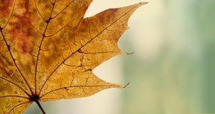 Шаблон открытки осени Детальный, желтый кленовый лист Стоковое Фото