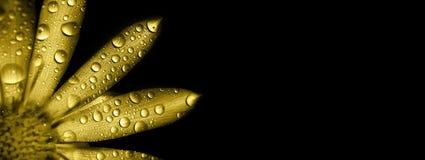 Шаблон поздравительной открытки цветка золота Стоковое Фото