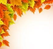 Шаблон предпосылки вектора осени Элементы кленовых листов сезона падения Стоковая Фотография RF