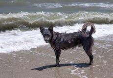 Шавка на береге моря. стоковое фото