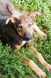 шавка собаки Стоковое фото RF