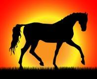 шагать лошади Стоковое Изображение