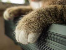 Шагающий меховой кот Tabby стоковые изображения rf