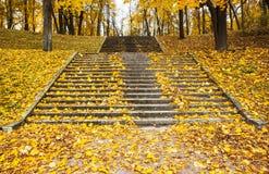 Шаги в желтые листья в осени Стоковые Изображения RF