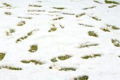 Шаги в снеге на зеленой желтой траве Земля покрытая с свежим снегом и печать человеческих шагов close snow texture up white стоковое изображение