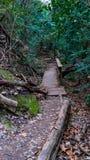 Шаги древесины и грязи через следы леса с мостом стоковые фотографии rf