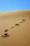 шаги дюны Стоковое Изображение RF