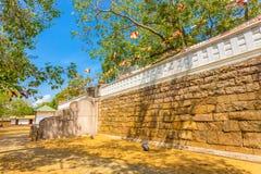 Шаги дерева Anuradhapura Jaya Sri Maha Bodhi западные Стоковые Изображения RF