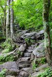Шаги леса каменные отстают вверх стоковые изображения