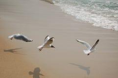 шаги летания стоковое фото rf