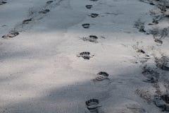 Шаги ноги в песок Стоковое Изображение