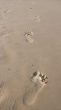 шаги ноги Стоковая Фотография RF