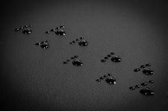 шаги ноги Стоковое Фото