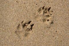 Шаги собаки Стоковое Изображение RF
