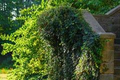 Шаги старого замка, лить вегетации, захода солнца Старый сад парка стоковые фото