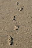 шаги Стоковые Изображения RF