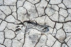 Шаг в сухой земле Стоковые Изображения RF