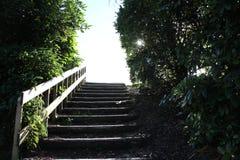 Шаг за шагом Стоковое Фото