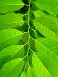 шаг листьев Стоковое фото RF