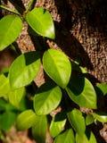 шаг листьев Стоковая Фотография