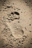 Шаг на песке пляжа Стоковое Изображение