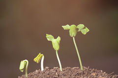 Шаг расти Стоковая Фотография RF