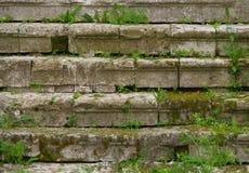 Шаг-травянисто стоковые фотографии rf