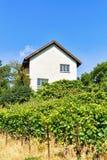 Шале в террасах виноградника Lavaux в Lavaux Oron Швейцарии Стоковая Фотография RF