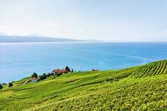 Шале в тропе Швейцарии террас виноградника Lavaux Стоковое фото RF